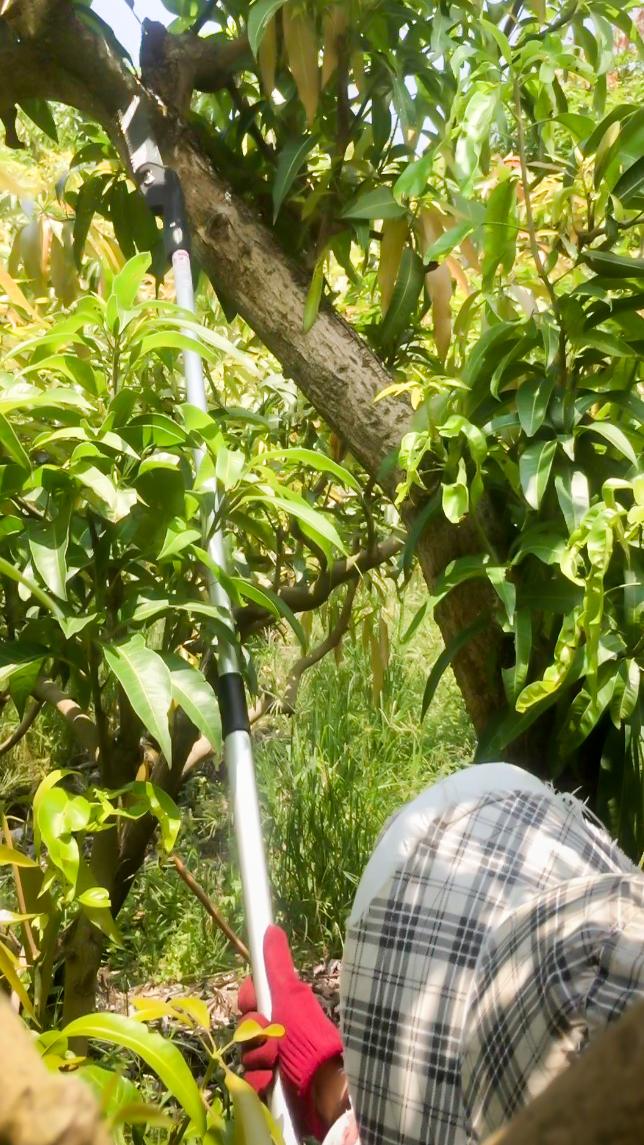 proimages/pro/gardening/p3-8-1.jpg
